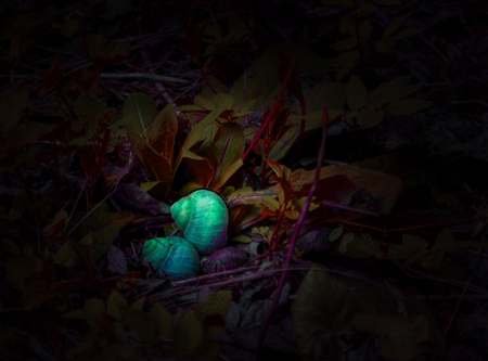 Two dazzling snails are resting on the dark, foliage-covered forest floor.