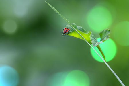 A bright black and red bug sits on a leaf.