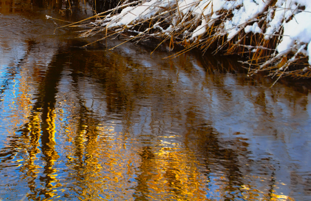 The plants are golden in the icy water.