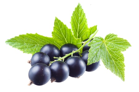 Black currant with leaves. Berries isolated on a white background photo