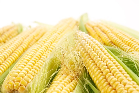 genetically modified: corn  soft focus Stock Photo