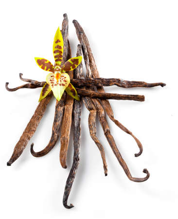 Vanilla Pods and Flower isolated on a white background photo
