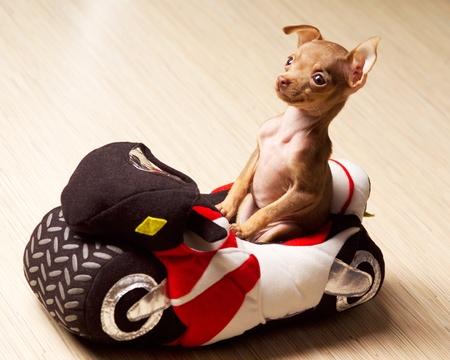 Dog on motorcycle photo