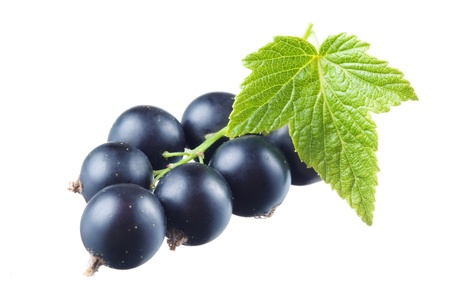 black currant:  Black currant with leaves