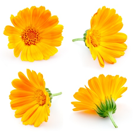 marigold flowers. Calendula. flowers isolated on white. set photo