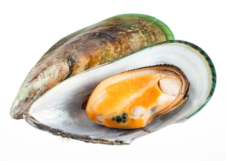 Mussel isolated on white  with clipping path photo