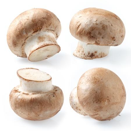champignons: collection  Fresh royal champignons, set on white background