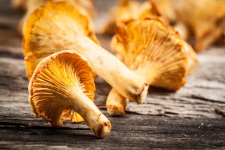 chanterelle: chanterelle mushrooms  Objects on white background
