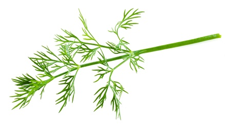 dill: dill isolated Stock Photo