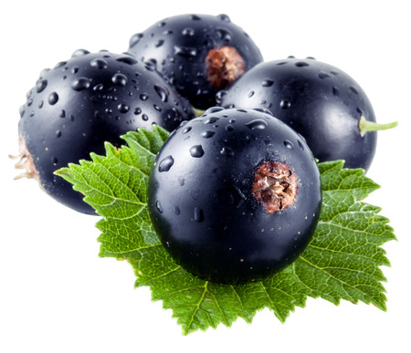 currants: black currants Stock Photo
