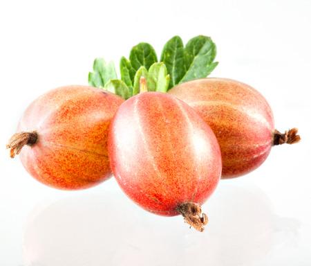 grosella: grosella espinosa aislado