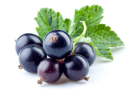 black currant: Black currant isolated