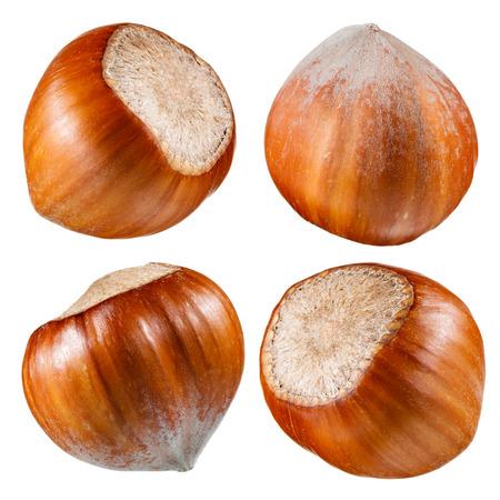 avellanas: Avellana. Colección de frutos secos aislados en blanco