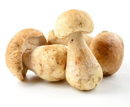 edulis: Group of porcini mushrooms on white Stock Photo
