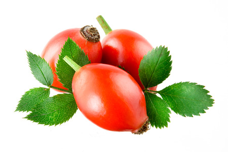 rosa: Rose hip isolated on a white background. Stock Photo