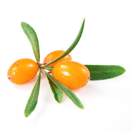 buckthorn: sea buckthorn branch isolated on the white