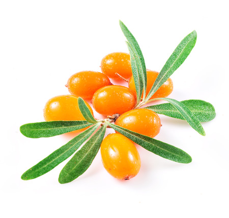 buckthorn: sea buckthorn berries isolated on the white Stock Photo