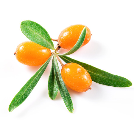 buckthorn: Sea buckthorn berries isolated on the white