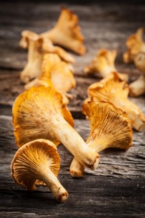 wild mushrooms: chanterelle mushrooms. Objects on white background