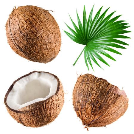 cocotier: Noix de coco avec des feuilles de palmier sur fond blanc. Collection Banque d'images