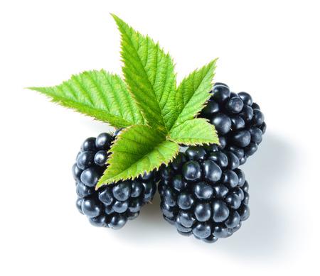 blackberries: Blackberries on white Stock Photo