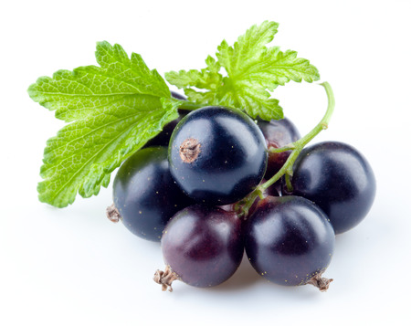 Black currant isolated photo