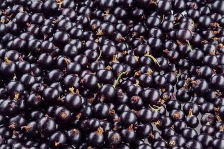 black currant: Black currant. Background Stock Photo