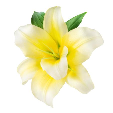 flor de vainilla: Vanilla flor aislada en blanco. Con trazado de recorte