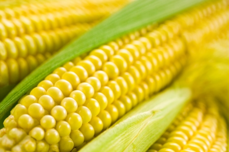 Corn  Soft focus