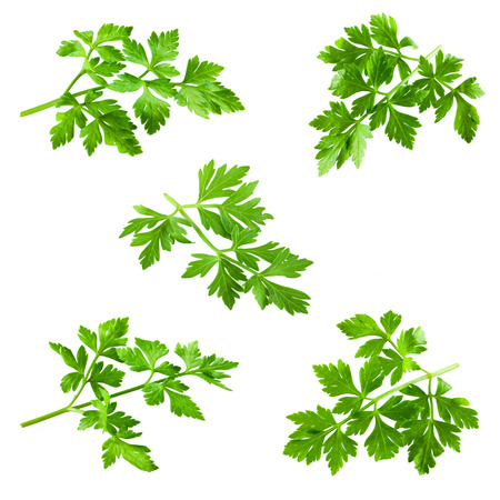 Collection of parsley isolated on white Reklamní fotografie - 25300203
