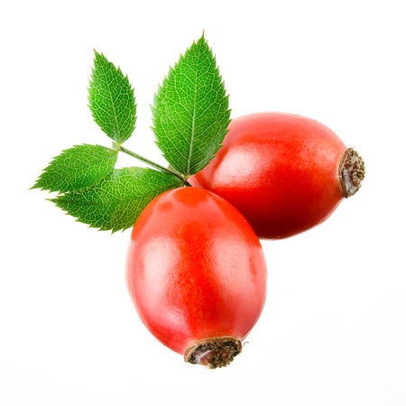 briar: Rose hip isolated on a white background. Stock Photo