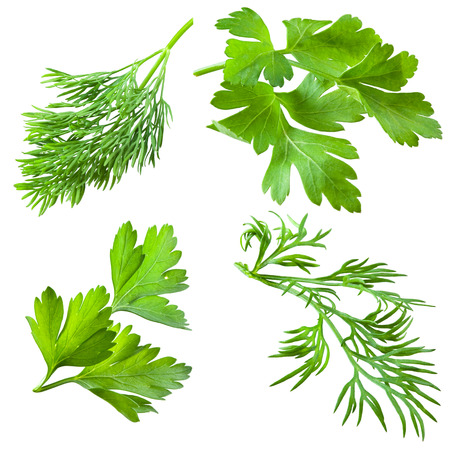 Parsley and dill isolated on white