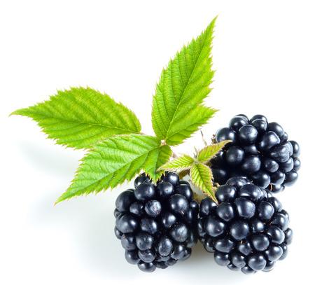 Blackberry isoliert
