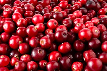 arandanos rojos: Cranberries macro. Foto de archivo
