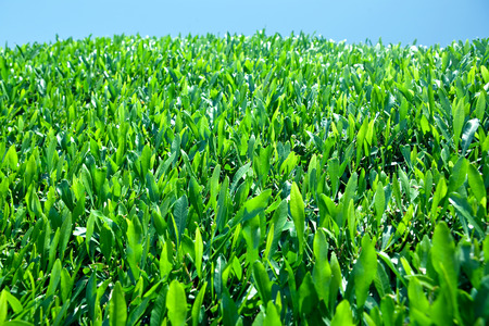 Green foliage background. photo