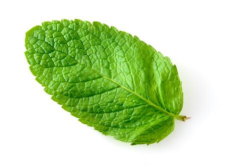 Fresh mint leaf isolated on white  Macro
