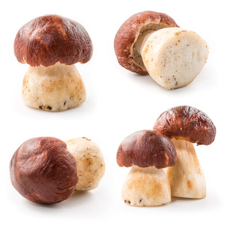 porcini: Porcini. Forest mushrooms. Collection Stock Photo
