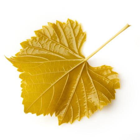 leaf grape: Hoja de uva en conserva para dolma en blanco Foto de archivo