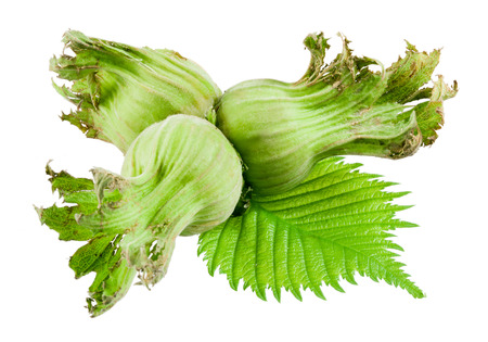 unbroken: Green hazelnuts with leaves isolated on white