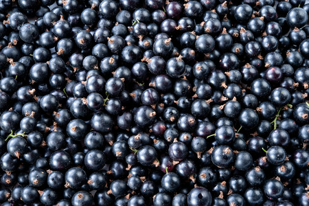 black currant: Black currant background