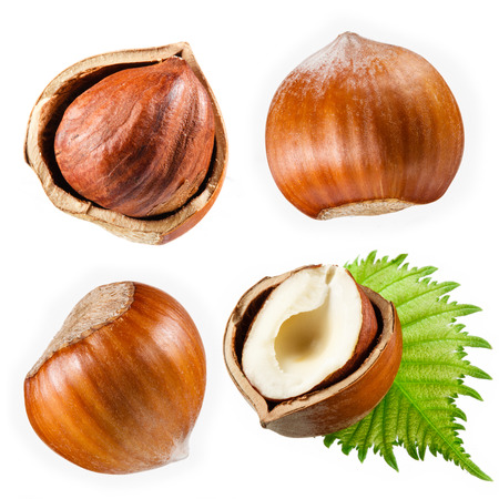 Hazelnut collection isolated on white Stok Fotoğraf