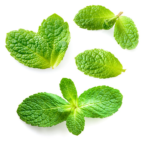 Fresh mint leaves isolated on white background. Collection Banco de Imagens - 35342825