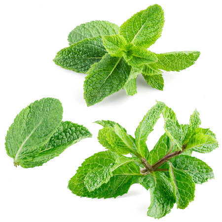 Fresh mint leaves isolated on white. Collection Stock Photo