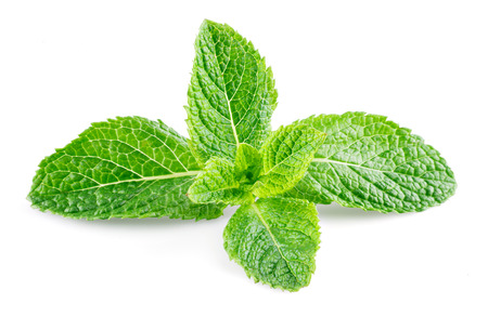 mint leaves: Mint leaves isolated on white background