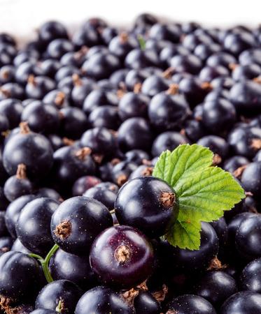 black currant: Black currant macro. Stock Photo