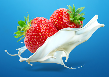 leche: Dos fresas que caen en el chapoteo de la leche aislados sobre fondo azul
