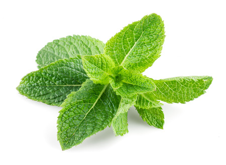 herbs: Menta aislada sobre fondo blanco