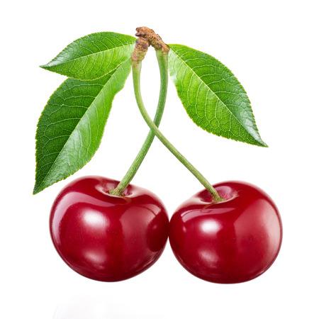 cereza: Cereza sobre fondo blanco
