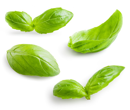 Fresh basil isolated on white background Banque d'images