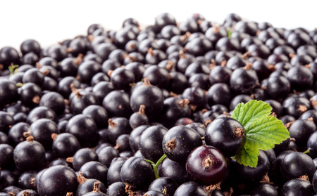 currant: Black currant background
